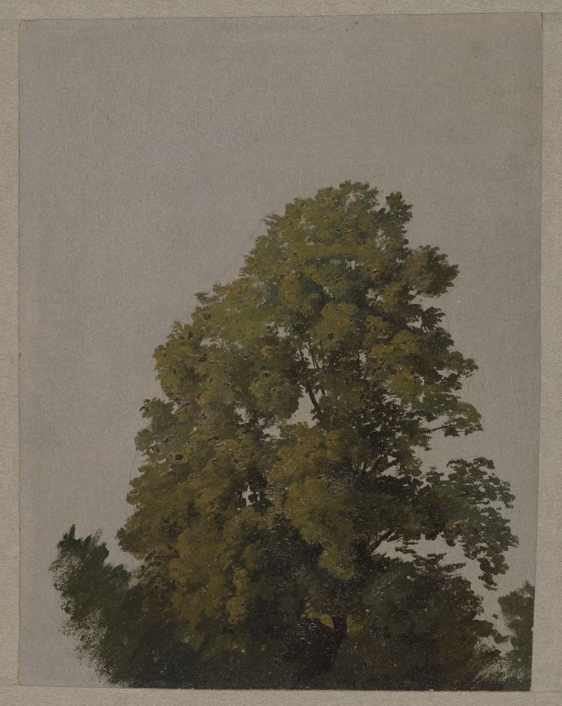Friedrich Philipp Reinhold (1779 - 1840), Baumstudie, ohne Datierung